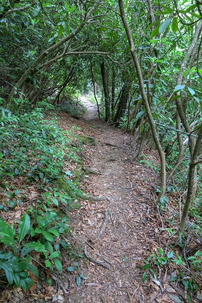 Bridges Camp Gap Trail -- 3,980'