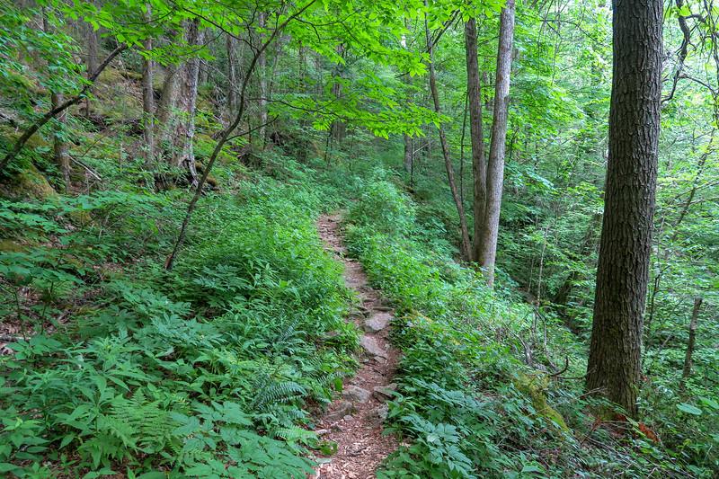 Bridges Camp Gap Trail -- 4,100'