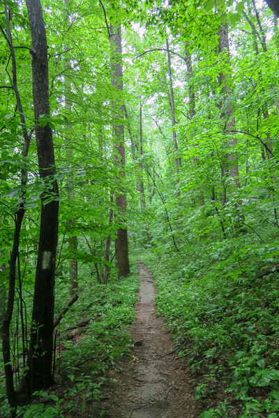 Buck Spring Trail -- 3,680'