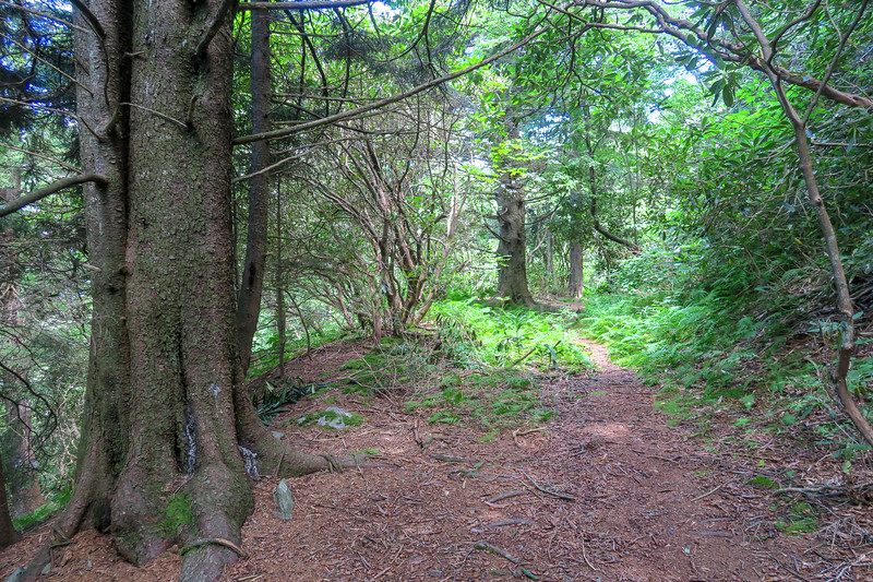 Buckeye Gap Trail -- 5,520'