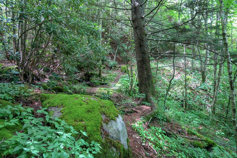 Buckeye Gap Trail -- 5,360'