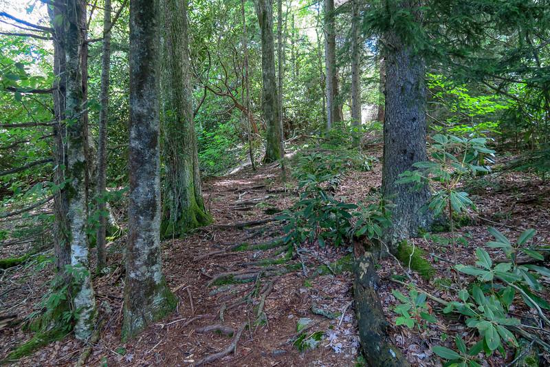 Buckeye Gap Trail -- 5,160'