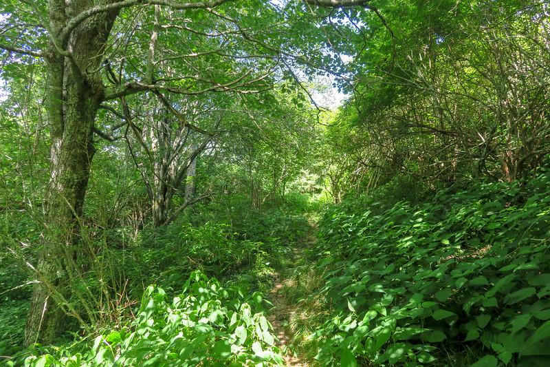 Buckeye Gap Trail -- 5,440'