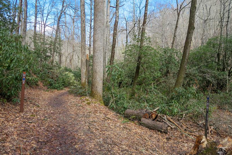Buckhorn Gap/Avery Creek Trail Lower Junction -- 2,560'