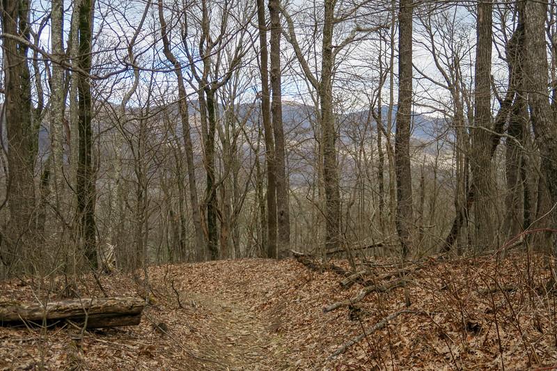 Buckwheat Knob Trail -- 3,840'