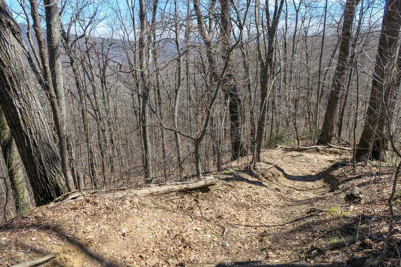 Buckwheat Knob Trail -- 3,650'