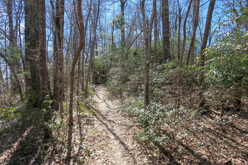 Buckwheat Knob Trail -- 4,000'