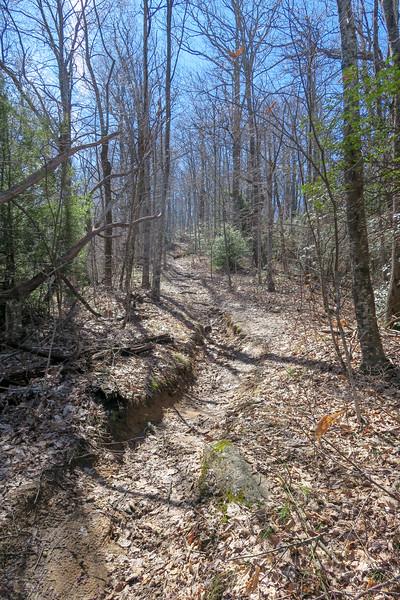 Buckwheat Knob Trail -- 3,960'