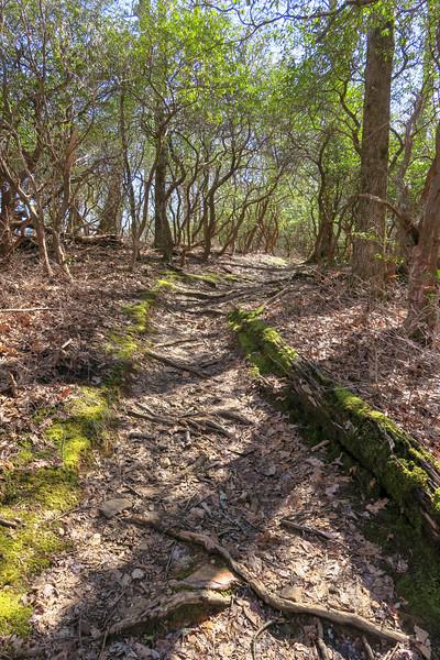 Buckwheat Knob Trail -- 3,780'