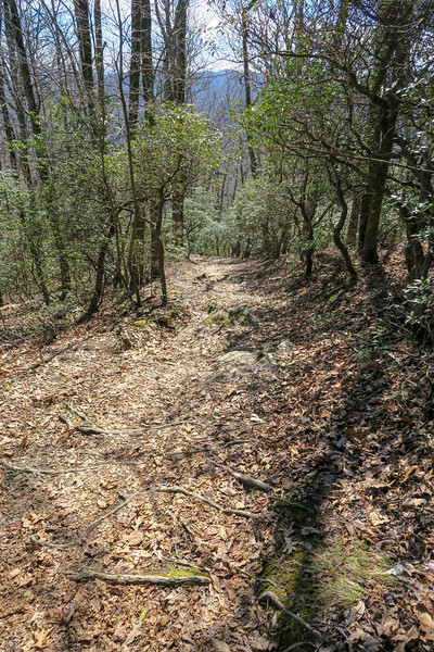 Buckwheat Knob Trail -- 3,760'