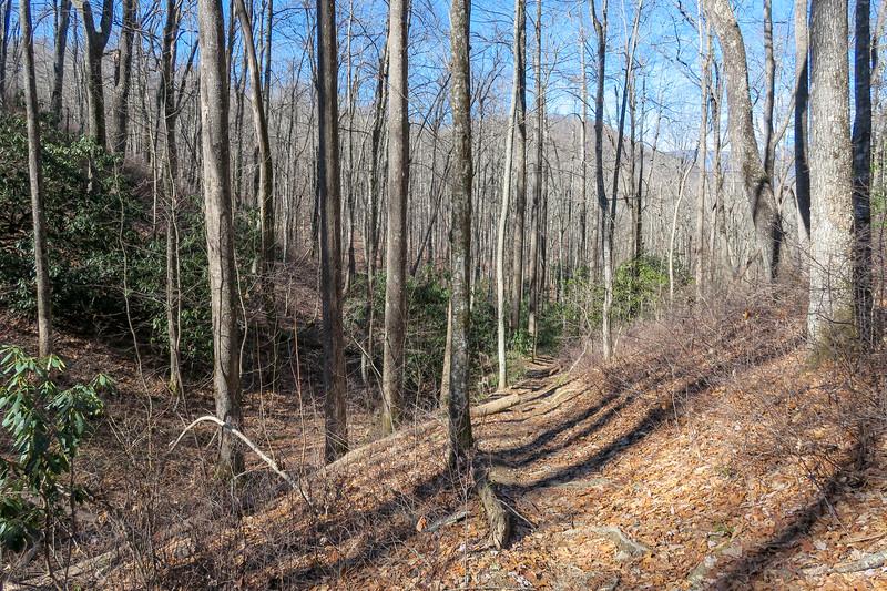 Butter Gap Trail -- 3,200'