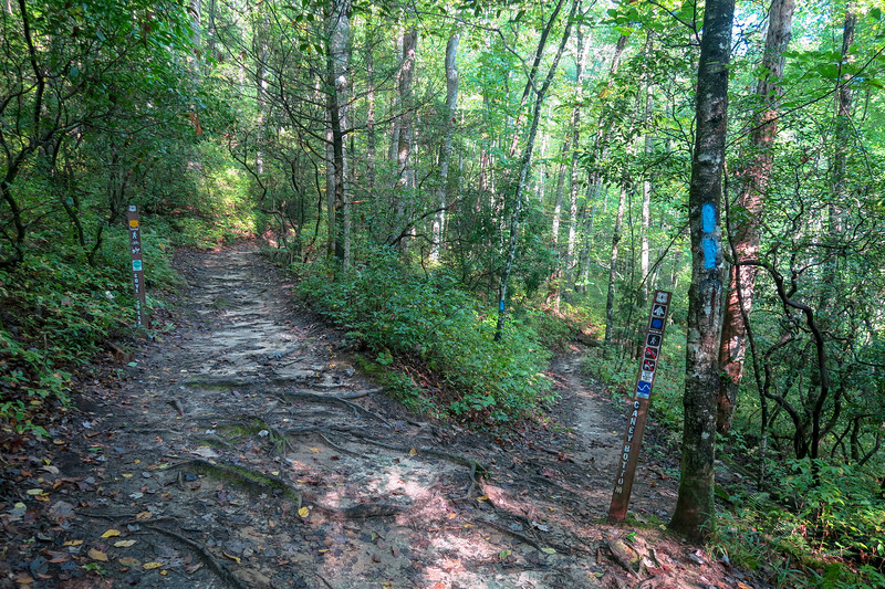 Caney Bottom/Cove Creek Trail Lower Junction -- 2,780'