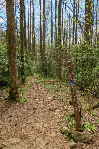 Cantrell Creek/Squirrel Gap Trail Junction -- 3,300'
