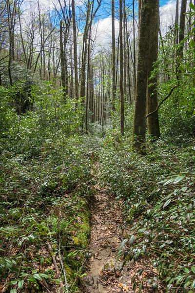 Cantrell Creek Trail -- 3,020'