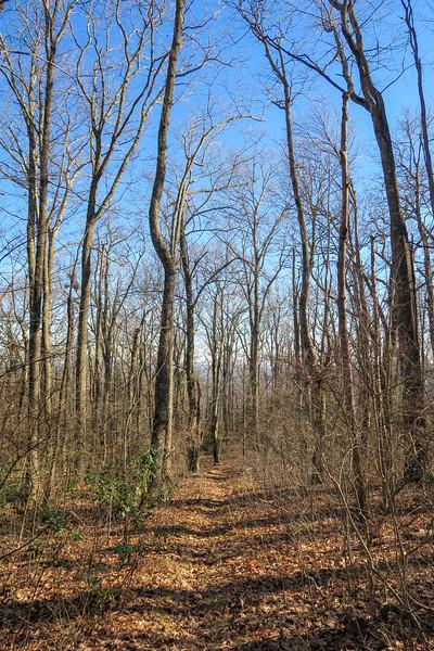Case Camp Ridge Trail -- 4,000'
