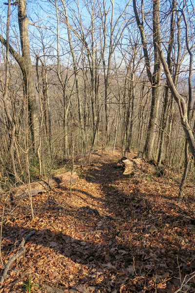 Case Camp Ridge Trail -- 3,700'