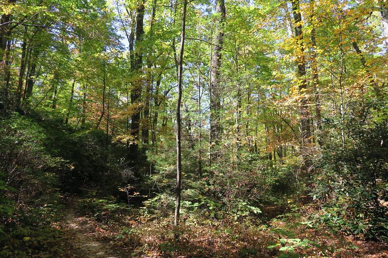 Cat Gap Bypass Trail -- 3,060'