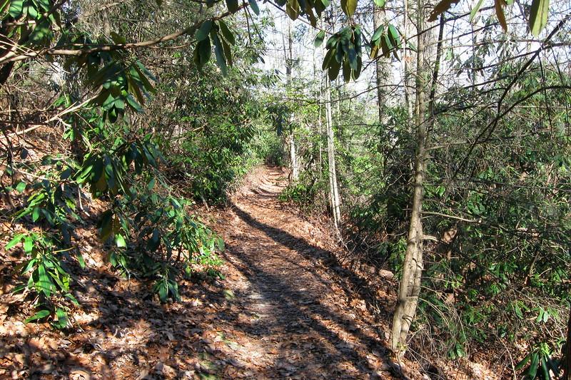 Cat Gap Bypass Trail -- 3,030'