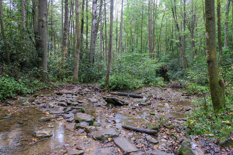 Cat Gap Loop Trail @ Horse Cove Creek -- 2,420'
