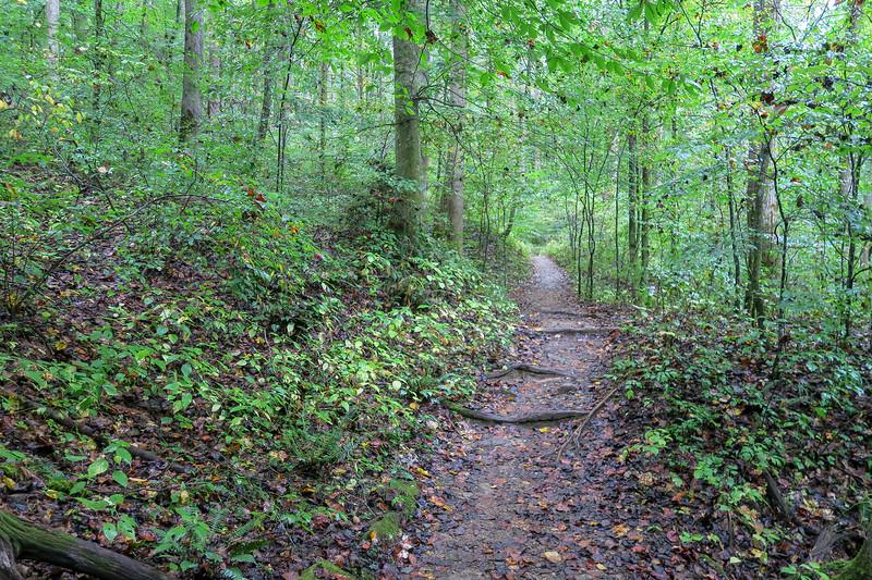Cat Gap Loop Trail -- 2,480'