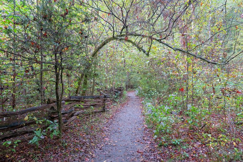 Cat Gap Loop Trail -- 2,340'