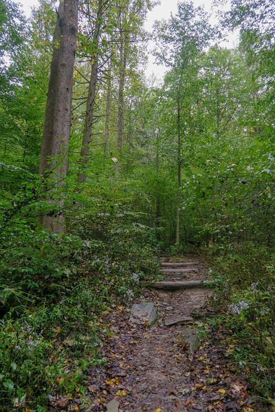 Cat Gap Loop Trail -- 2,440'