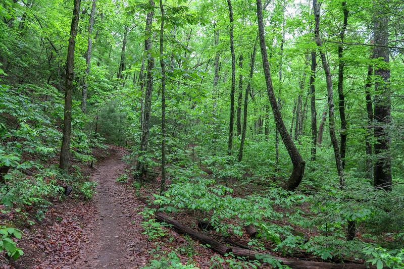 Chestnut Cove Trail -- 2,620'