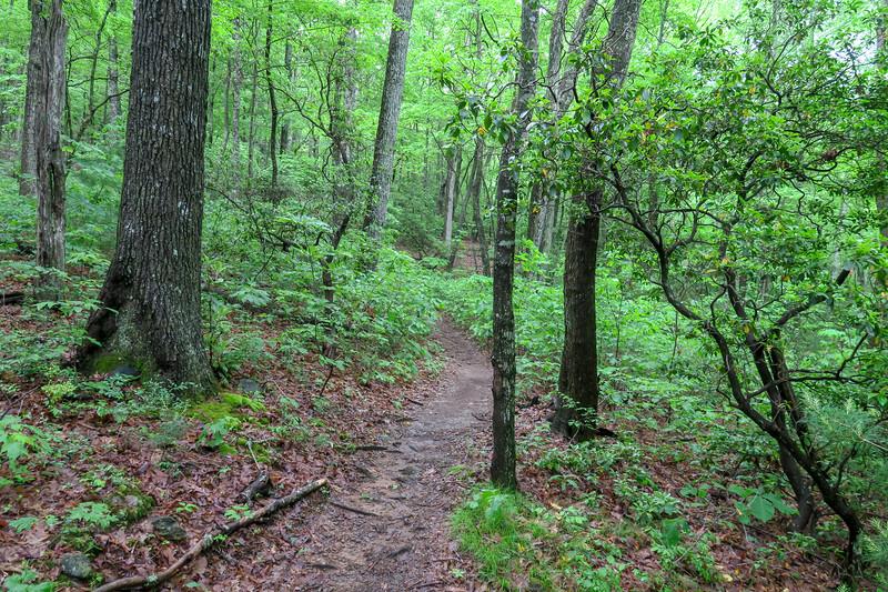 Chestnut Cove Trail -- 2,660'