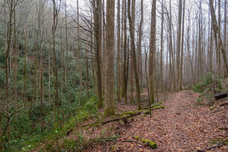 Clawhammer Cove Trail -- 2,700'
