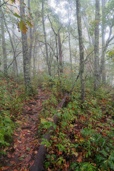Cold Mountain Trail -- 5,270'
