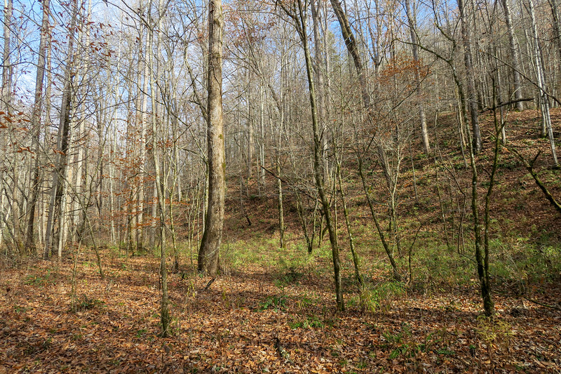 Coontree Loop Trail -- 2,280'