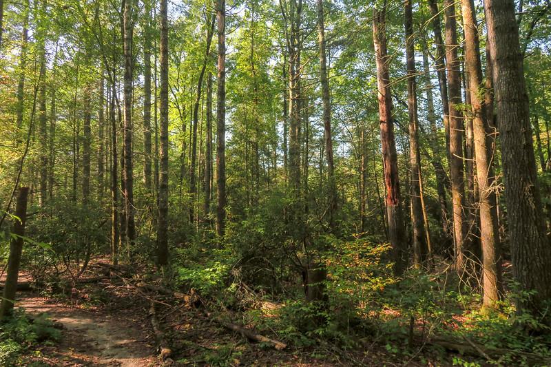 Cove Creek Trail -- 3,060'