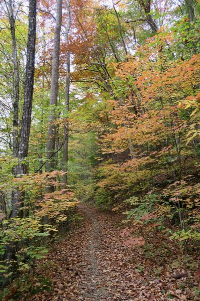 Daniel Ridge Loop Trail -- 2,780'