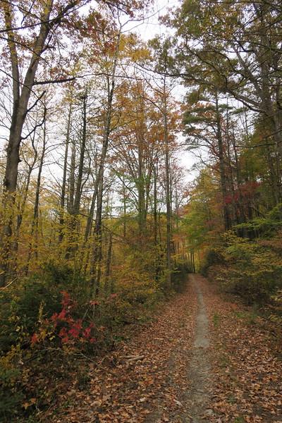 Daniel Ridge Loop Trail -- 2,660'