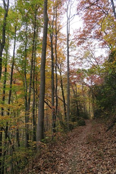 Daniel Ridge Loop Trail -- 2,750'