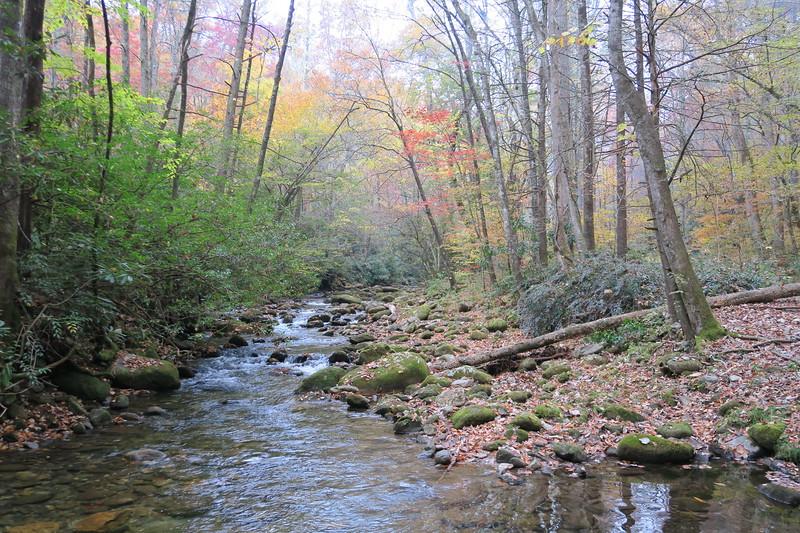 Daniel Ridge Loop Trail -- 2,640'