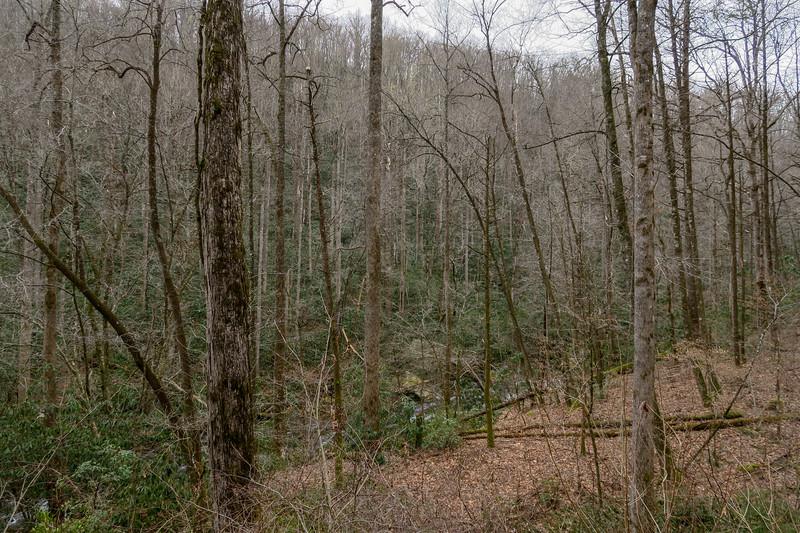 Davidson River Trail -- 2,500'