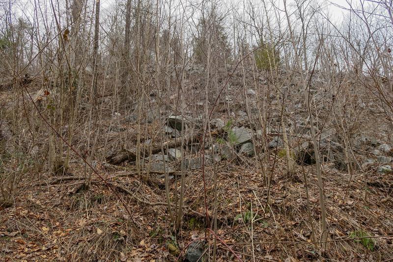 Davidson River Trail -- 2,450'