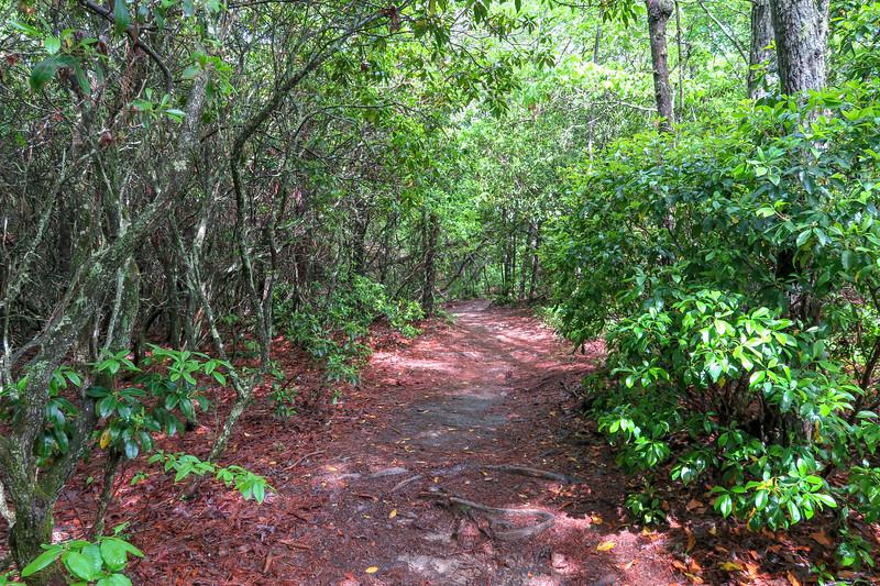 Deer Lake Lodge Trail -- 2,240'