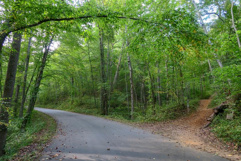 Deerfield Loop/Pine Tree Loop Trailhead @ Wesley Branch Road -- 2,190'