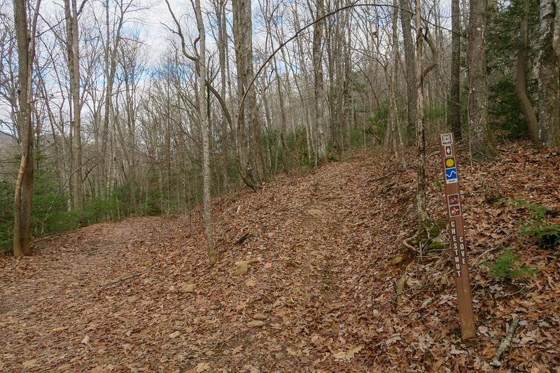Explorer Loop/Chestnut Cove Trail Junction -- 2,590'