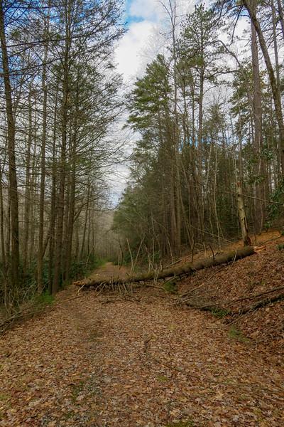 Explorer Loop Trail/F.R. 479H -- 2,380'