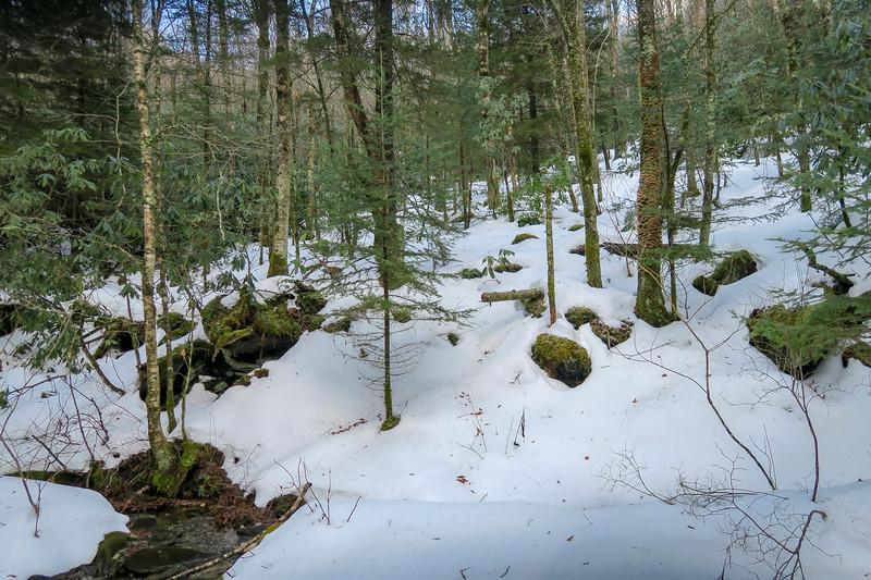 Flat Laurel Creek Trail - 5,070'