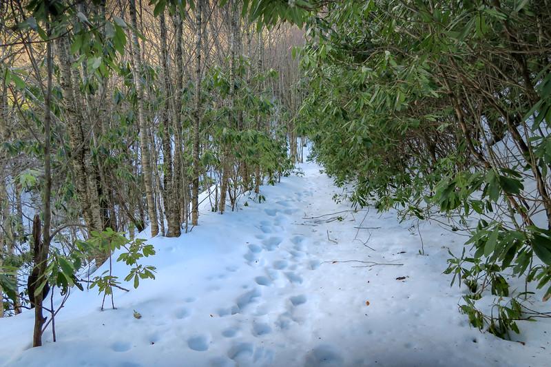Flat Laurel Creek Trail - 5,040'