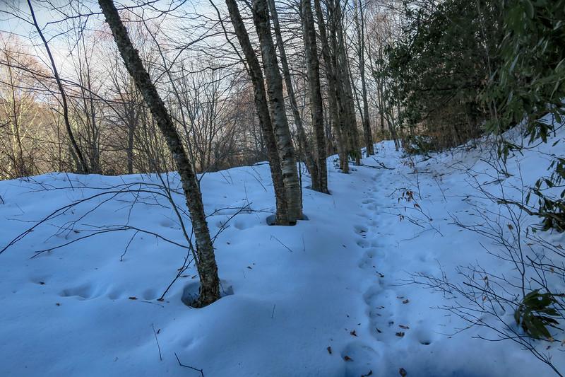 Flat Laurel Creek Trail - 5,050'