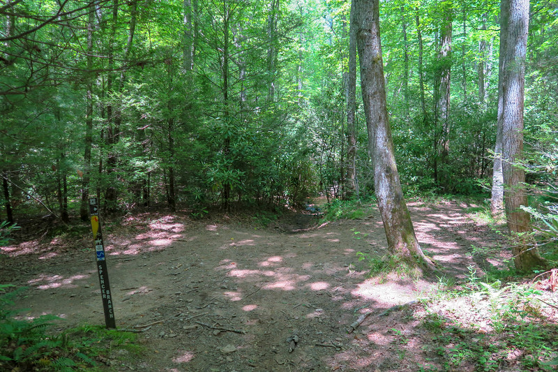 Fletcher Creek/Spencer Branch Trail Junction -- 2,610'