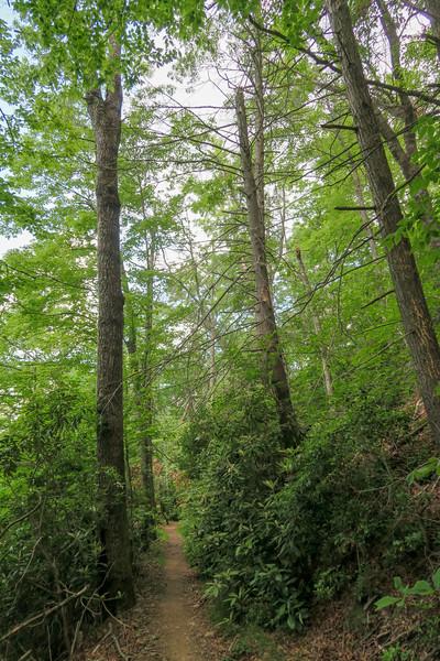 Fletcher Creek Trail -- 2,740'