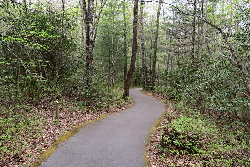Forest Festival Trail -- Improvement Cutting