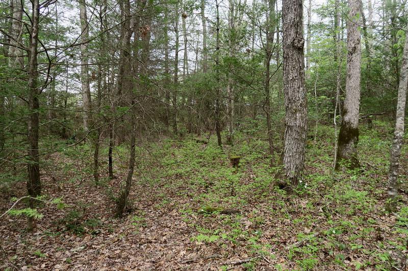 Forest Festival Trail -- Biltmore Forest Plan