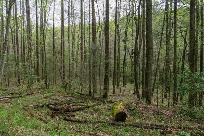 Foster Creek Trail -- 2,270'